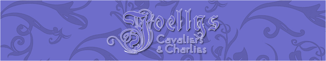 Joellys Cavaliers and Charlies